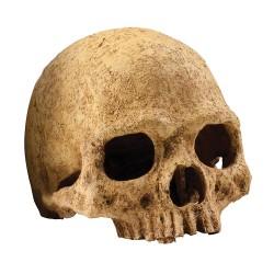 Exo Terra Primate Skull Hideaway